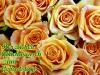 grusskarten-geburtstag-rosen-gelb-2
