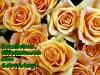 grusskarten-geburtstag-rosen-gelb