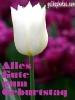 geburtstag-ecard-tulpe-weiss-320